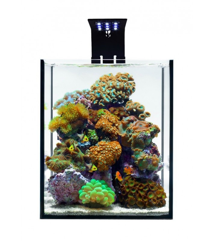 Light Maintenance Reef