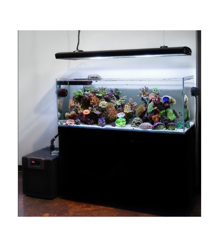 Medium Maintenance Reef