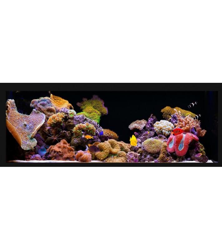 Silver  Maintenance Reef