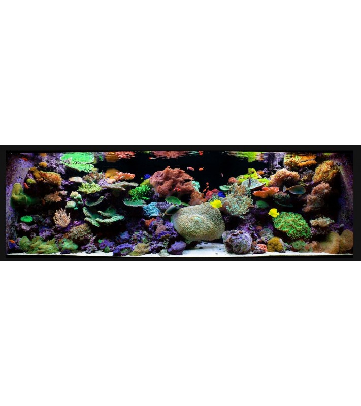 Gold  Maintenance Reef