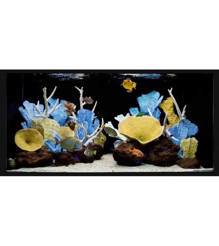 Platinum  Maintenance Reef