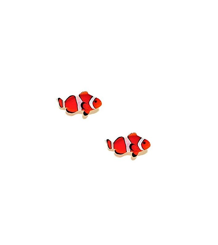 Amphiprion ocellaris fire red pair