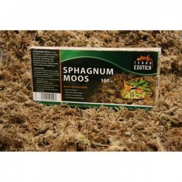 Terra Exotica Sphagnum Moos