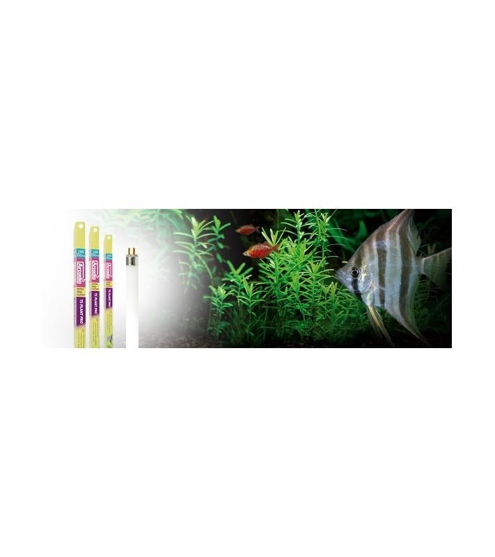 Arcadia Plant Pro