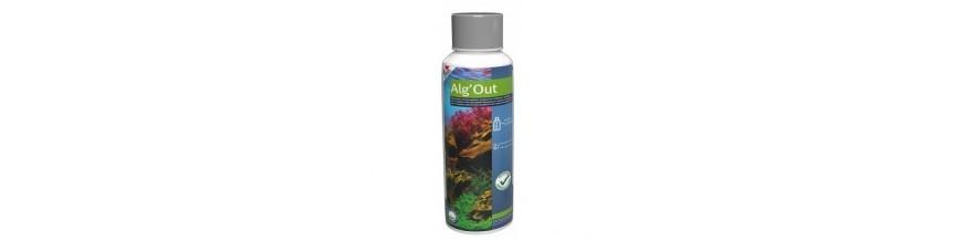 Anti Alge