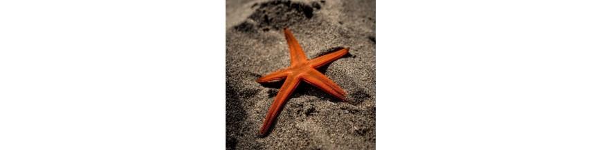 Stele de mare