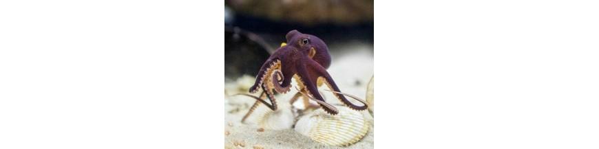 Caracatite si meduze