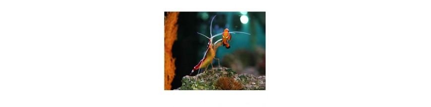 Mentenanta acvarii marine